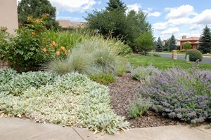 All About Xeriscape