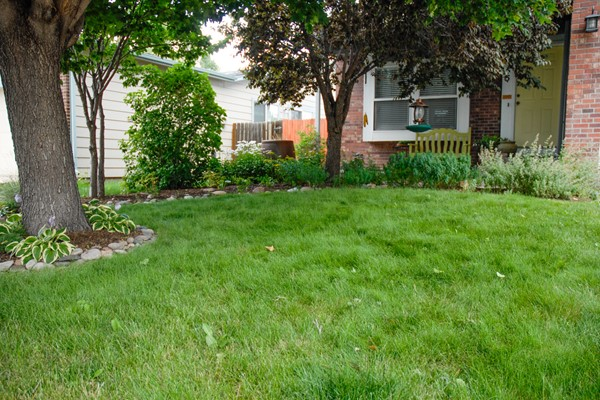Colorado Springs Utilities Xeriscaping Shady Fescue Front Yard