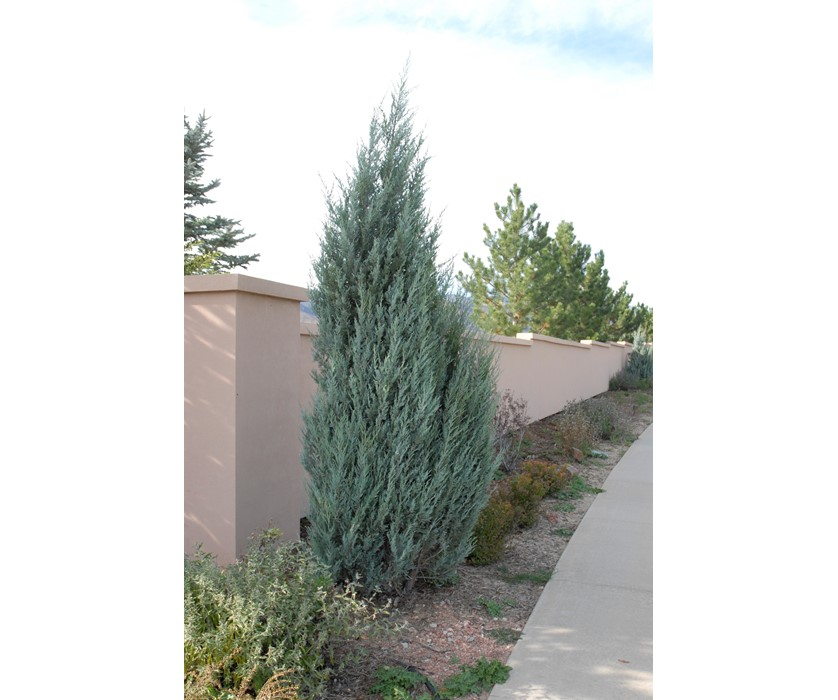 Colorado Springs Utilities Xeriscaping Rocky Mountain